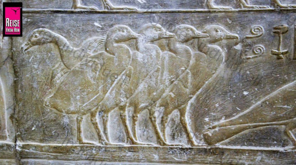 Relief mit Gänsen im Grab von Achethotep und Ptahhotep in Saqqara