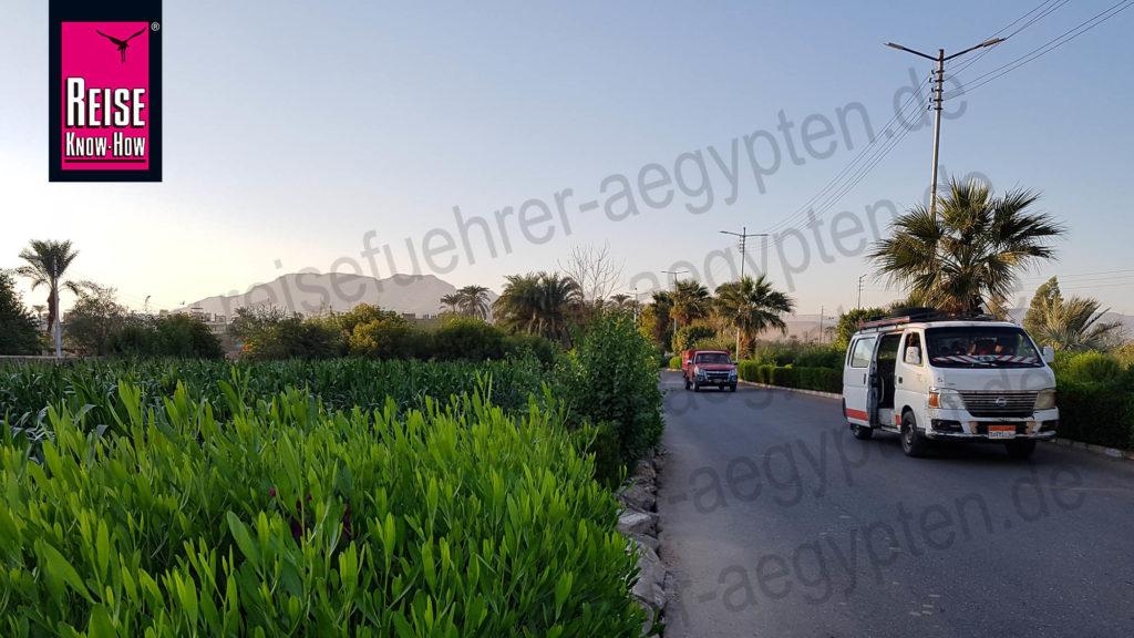 Sammeltaxis fahren durch grüne Felder in Theben West
